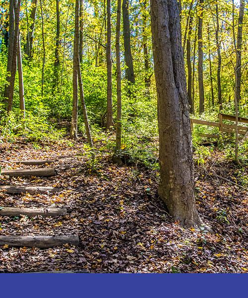Brook Trail